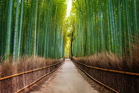 foret-de-bambou