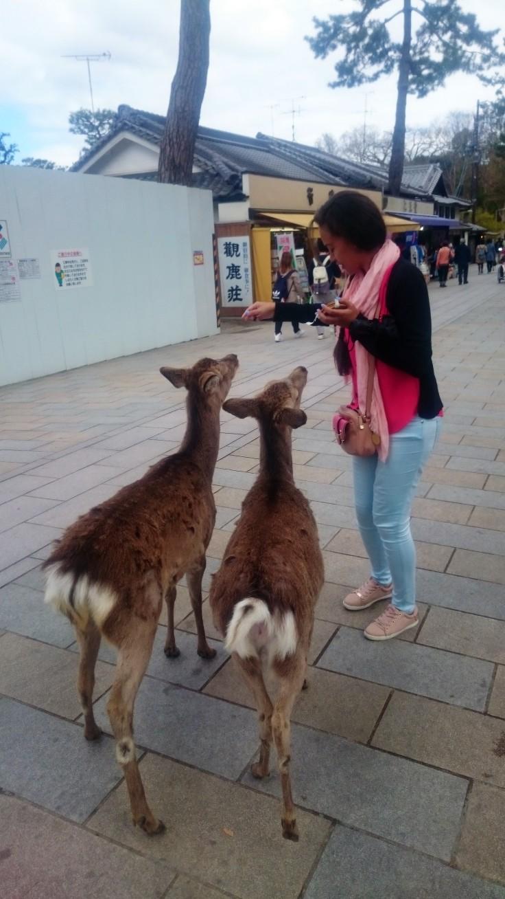 Daims à Nara