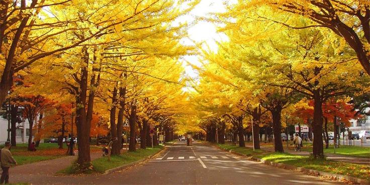 koyo_street
